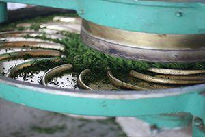 Thé Vert roulage